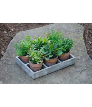 Assorted Herbs In Tray
