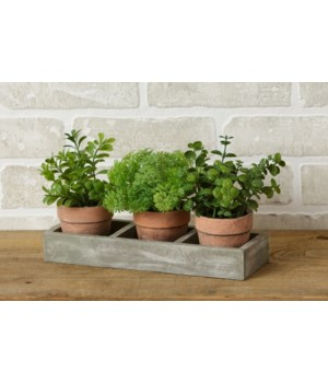 Assorted Herbs In Wooden Tray