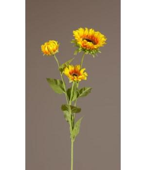 Stem - Yellow & Orange Sunflowers