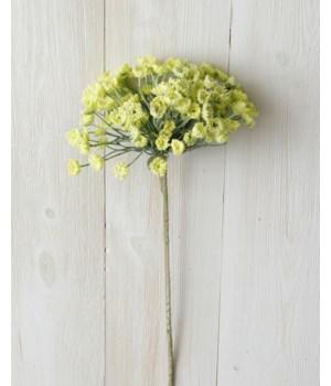 Branch - Allium, Yellow