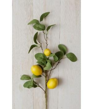 Branch - Lemon