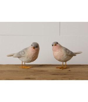 Birds - Standing