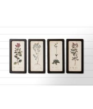 Framed Prints - Botanicals