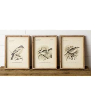 Framed Prints - Birds