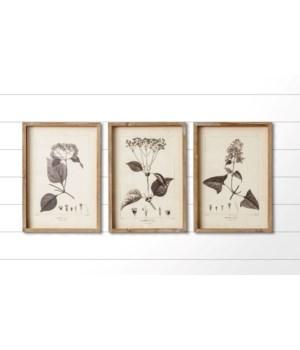 Framed Prints - Black And White Botanical