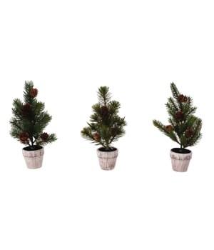 3 Asst Pine Tree w/Wooden Pot