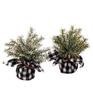 2 Asst Mini Pine Tree w/White/Black Plaid Base