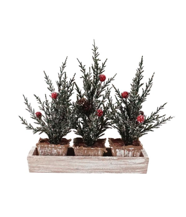 3 Pine Trees w/Berries in Crate (non-removable