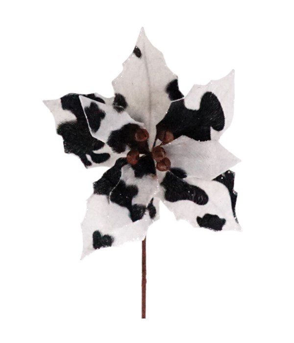 Cow Print Poinsettia Pic