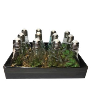 Succulent Light Bulbs with LED String Lights (Set Of 12, 4 Of Each)