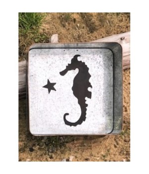 Seahorse Metal Box 8 in.x8 in.x3.5 in.