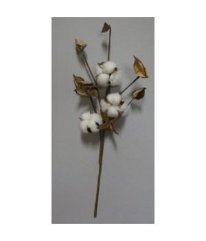 Cotton Pick