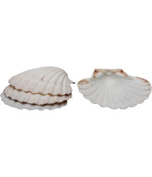 BAKING SHELLS SET/4 11-12 CM