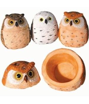OWL TREASURE BOX ASST