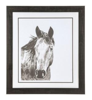"""""""HORSE SNAPSHOT 1"""""""
