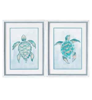 Aquatic Turtle 1 & 2