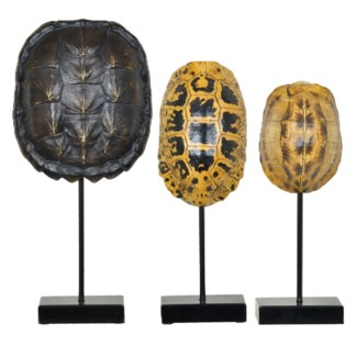 Turtle Shell Statues