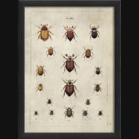 EB Beetle Study I