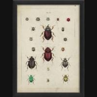 EB Beetle Study II