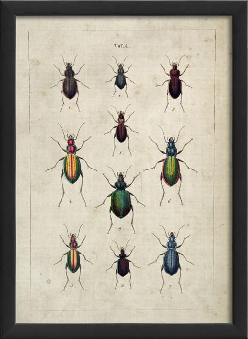 EB Beetle Study III