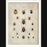 LN Beetle Study I