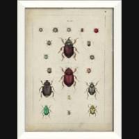 LN Beetle Study II
