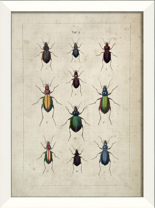 LN Beetle Study III