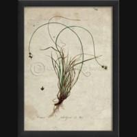 EB Botanical I