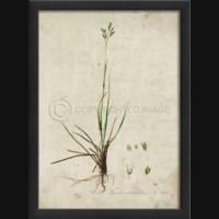 EB Botanical III