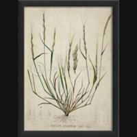 EB Botanical IV