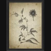 EB Passion Flower