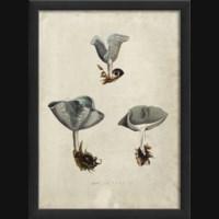 EB Mushroom I