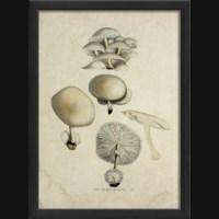 EB Mushroom II