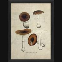 EB Mushroom III