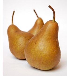 BOSC PEARS (PACK OF 3 PIECES)