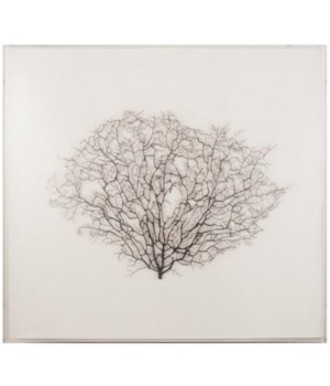 27 x 25 Large Natural Sea Fan on Oyster Linen
