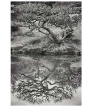 38.5x55.5 Tree and Reflection Nara, Glass Framed