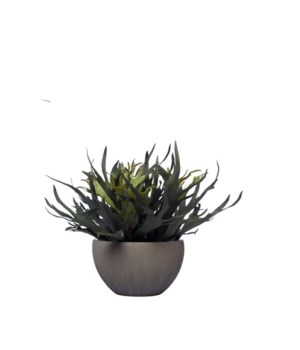 Staghorn in Gray Pot, 18