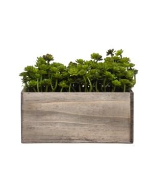 Wall Hanging Mini Echevaria in Small Wood Box