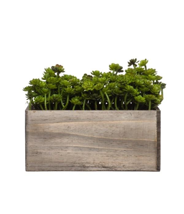 Wall Hanging Mini Echeveria in Small Wood Box