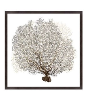 40x40 Underwater Branches I, Glass Framed Dimensional Art, Frame 36PUI6405