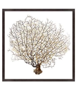 40x40 Underwater Branches II, Glass Framed Dimensional Art, Frame 36PUI6405