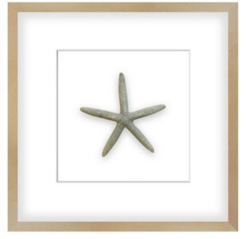 20x20 Large Grey Starfish, Shadow Box