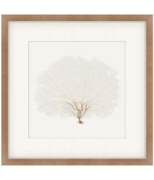 19x19 Coral Seafan White Walnut Shadow Box