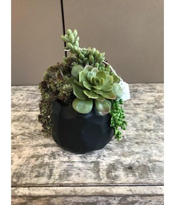 Medium Black Hexagon Pot with Mixed Succulents