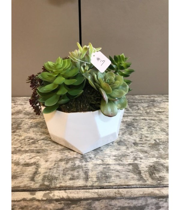 Medium White Pot with Mixed Succulents