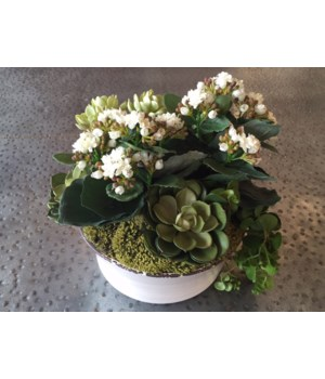 Mixed Succulents w/ Kalanchoe in Rustic Bowl