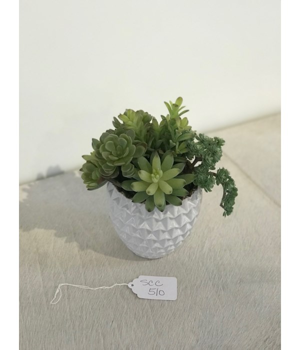 Mixed Succulents in Small White Dimensional Pot