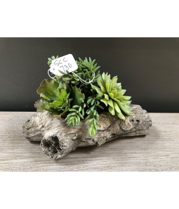 Succulents in Small Log