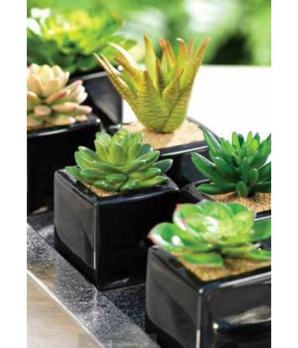 Desert Succulents in Ceramic Container